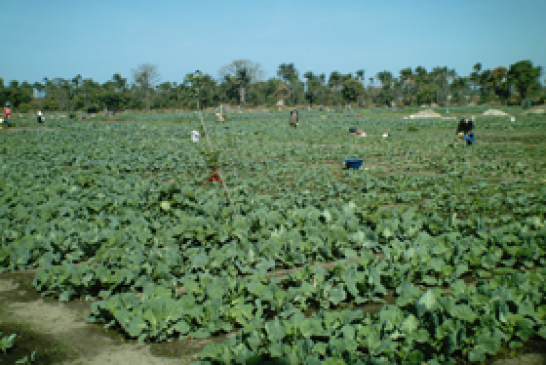 Investment Opportunities in Gambia