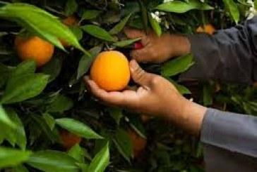 Morocco key exports