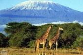 Africa's Virgin National Parks