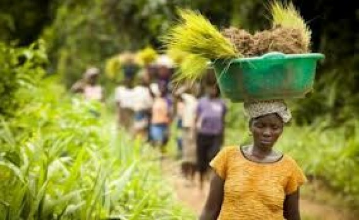 Investment opportunities in Liberia