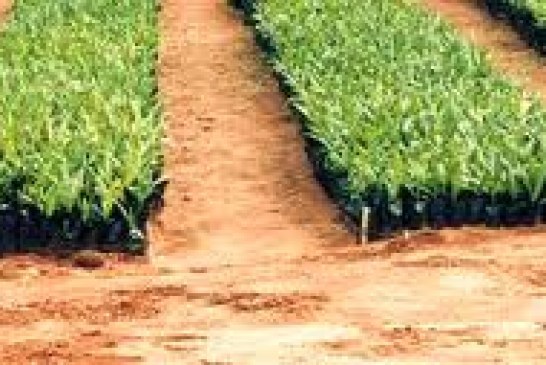 Exports of Sao Tome and Principe